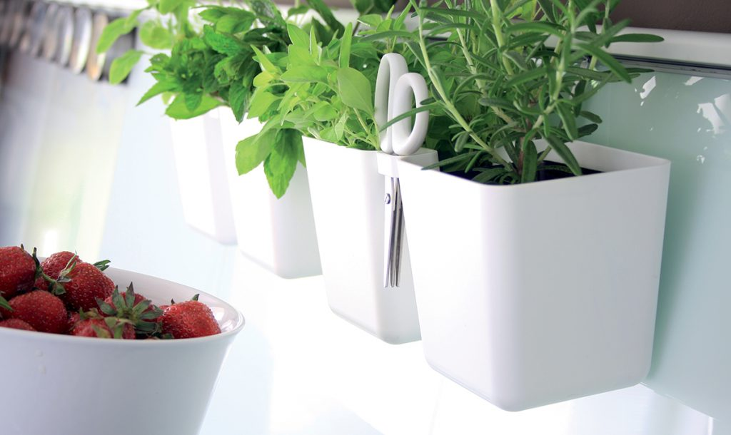 Doniczki na zioła – ciekawe rozwiązanie w bloku